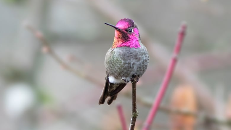 As the deep freeze hits, here are 3 easy ways you can protect your local hummingbirds