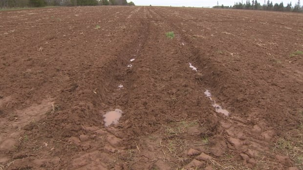 PEI potato soggy field 1