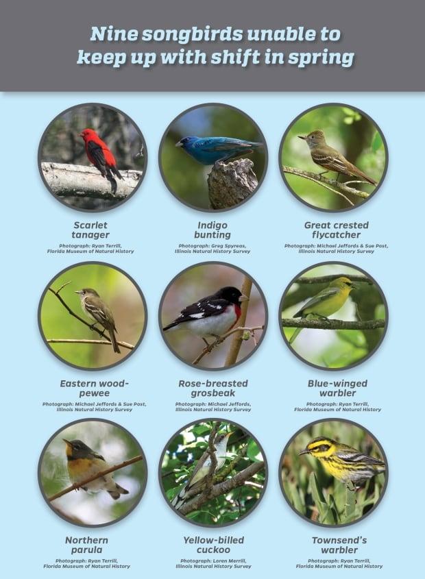 Birds spring migration