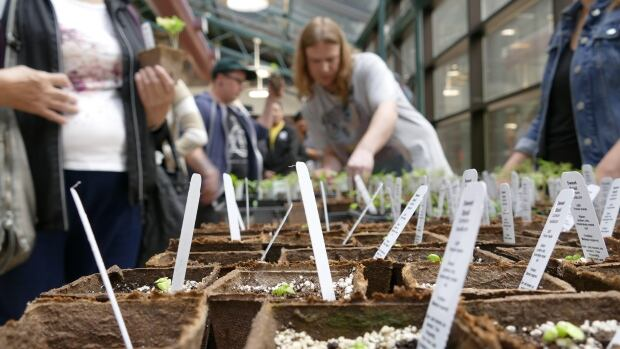 Hundreds showed up to pick up free plants grown by University of Winnipeg students on Wednesday.