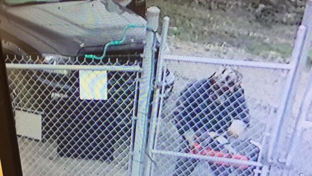 This security camera image posted to Facebook shows a man using a gas-powered saw to break into a central Alberta gas plant.