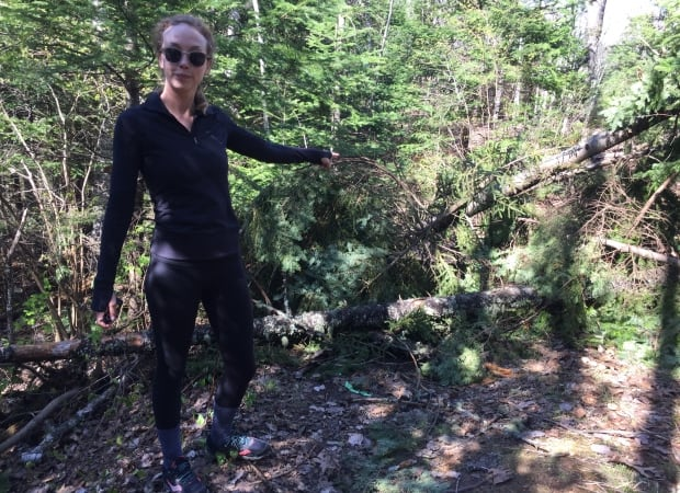 Hall's Creek Trees cut