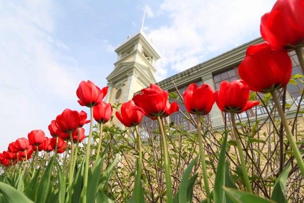 tulips agriculture pavilion lansdowne park canadian tulip festival ottawa