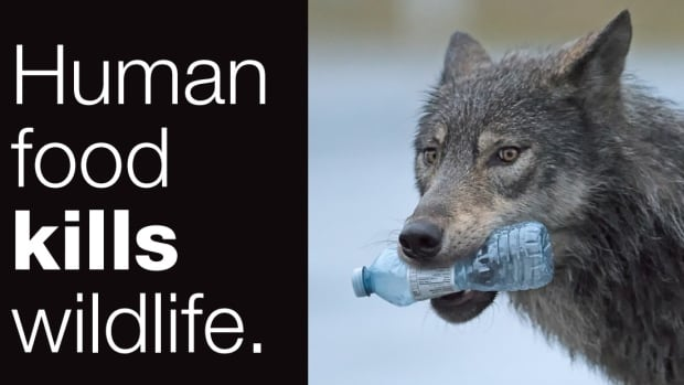 An image from the public awareness campaign Parks Canada is running in Banff this summer to reduce human-wildlife conflicts.