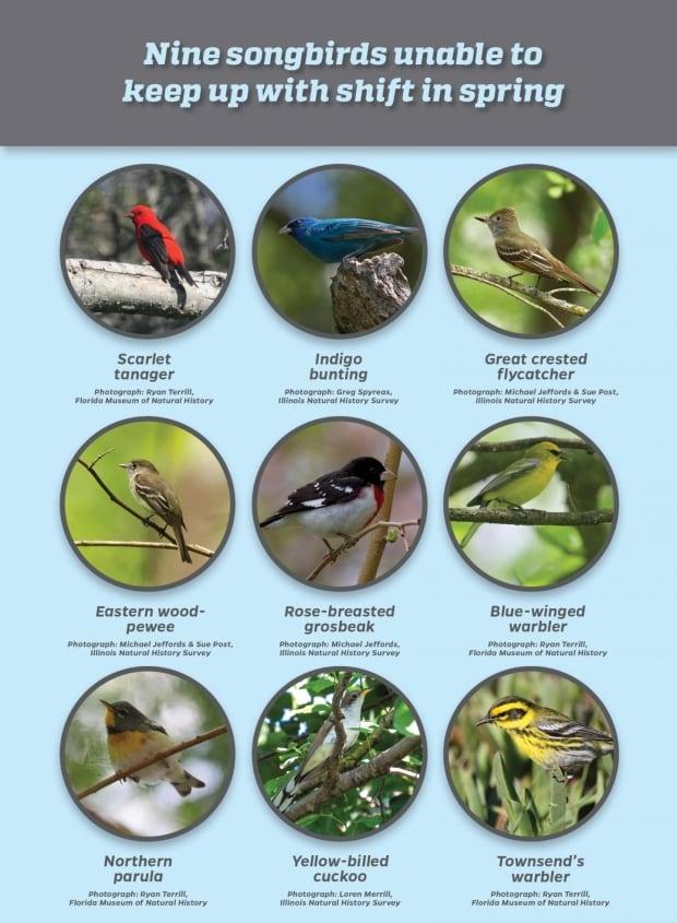 bird study species chart