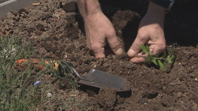 Spring tips from a Sask. expert to help your garden grow