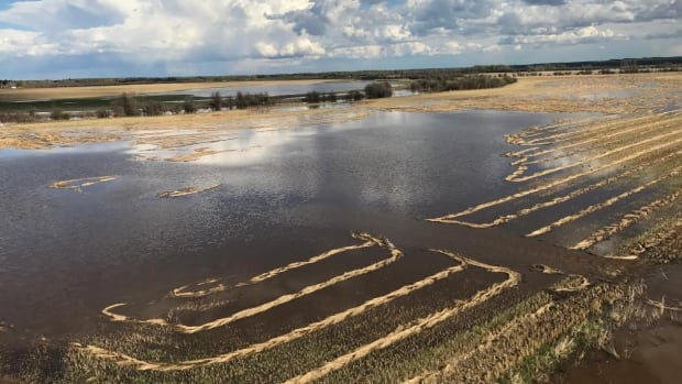 About 1,500 acres on John Krysztan's farm are underwater due to flooding on the nearby Whitemud River.