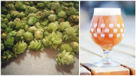 Goat brains, pizza and other odd additives show off creative beer brewing