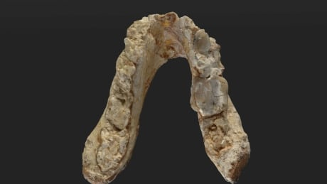 Early human jaw
