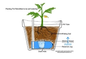 diagram of diy self watering pot