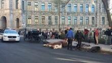 caleche accident quebec city horse