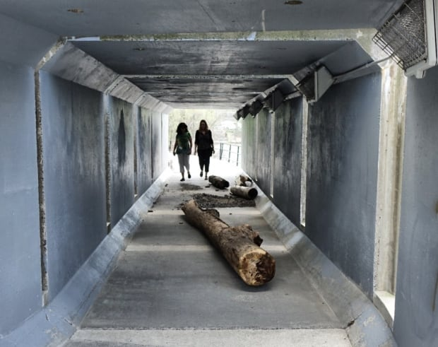 Driftwood in an NCC path underpass May 19, 2017