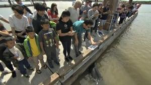 'Unbelievable': Dozens swarm dock where sea lion grabbed girl, despite warnings