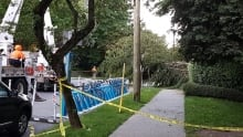 Trees down in Vancouver