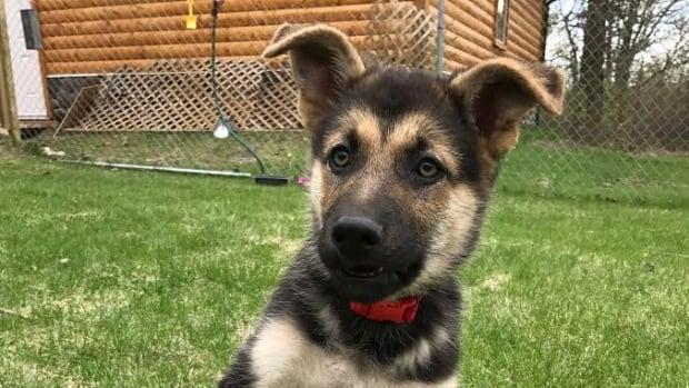 Sadie the puppy