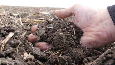 Manitoba soil