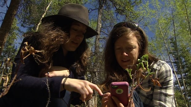 Lucy Johanson (left) shows CBC reporter Karen McColl how to use the iNaturalist app to record a plant sighting.