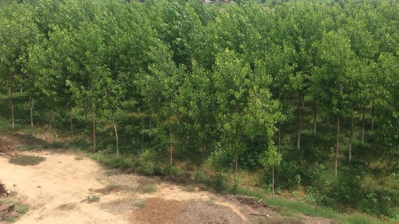 Planting trees can't counter carbon emissions: Bob McDonald