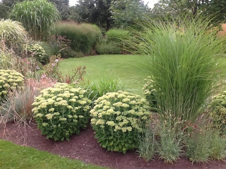 A Grass For Every Location Ornamental Grasses Taking Off In