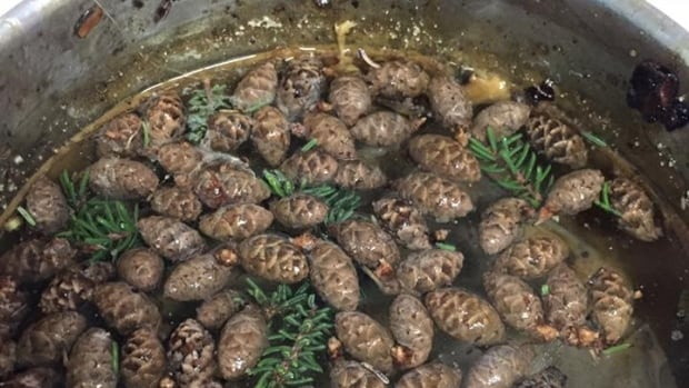 Spruce buds are boiled for the liquid which is used to relieve colds, sore throats, coughing and chest ailments. The longer it boils the more potent it is.