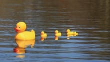 Nova Scotia Power increases the water flow to speed up the rubber duck race.