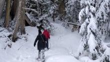 Johanna Wagstaffe McBride Ancient Forest Snow