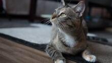 Anabelle Regina Cat Rescue