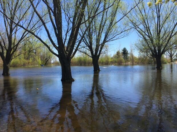 toronto islands flooding