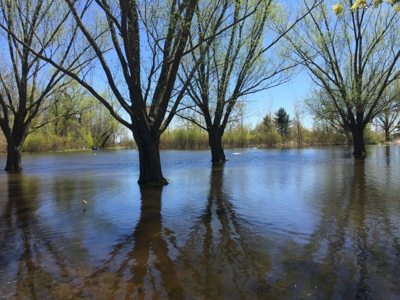 Flooded Areas Like This One On The Toronto Islands Are Prime Breeding Grounds For Mosquitoes City Of Toronto