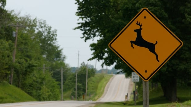 A new study shows that fences can help reduce road kill