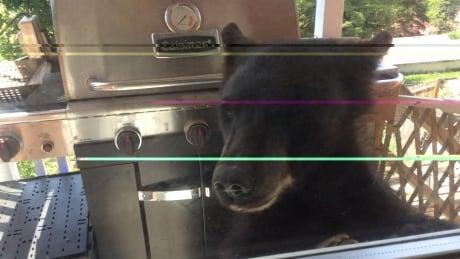 Bear in family home