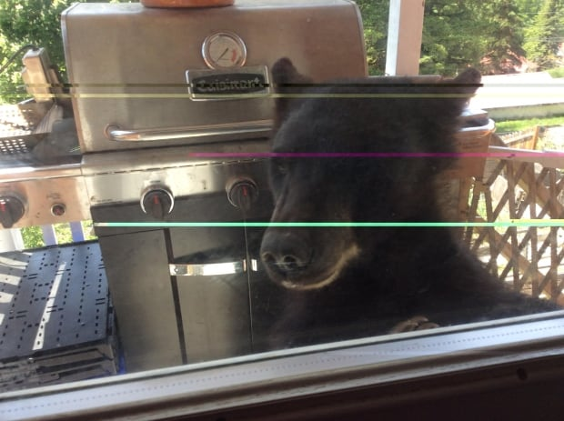 Bear in family home