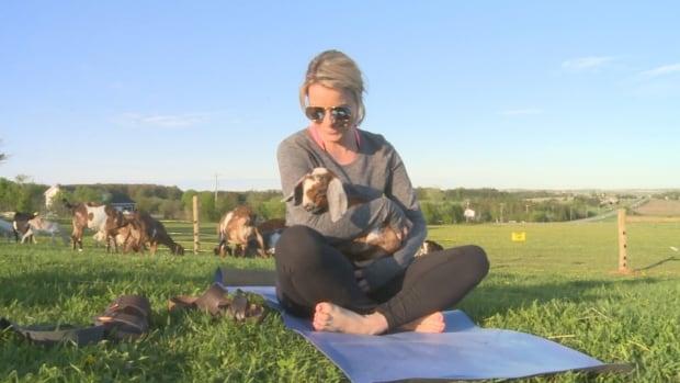 Island Hill Farm had its first 'farm yoga' class on Thursday.