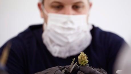 Canada marijuana supply shortages