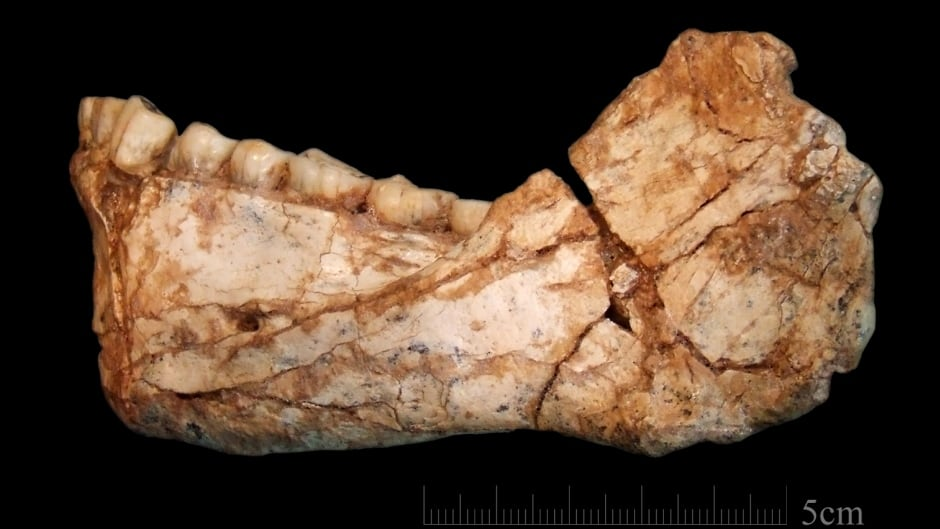 It's been long believed that East Africa was where modern humans evolved. But the latest discovery of fossils in northwestern Africa shows otherwise.