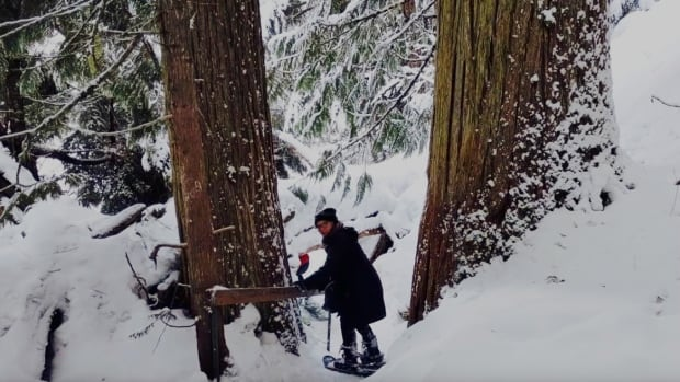 """""""My snowshoe expedition through the Ancient Cedar Forest, near McBride, B.C. —  a journey through space and time."""