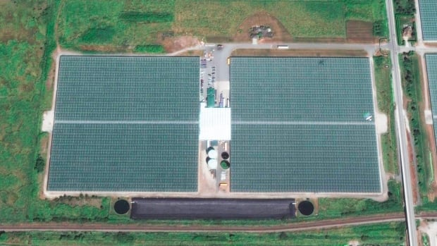 In a joint venture with Emerald Health Therapeutics, produce company Village Farms plans to convert this 1.1 million square foot greenhouse in Delta B.C. to cannabis production.