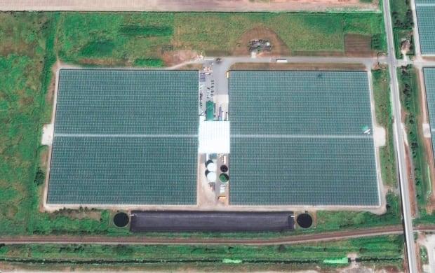 Village Farms greenhouse