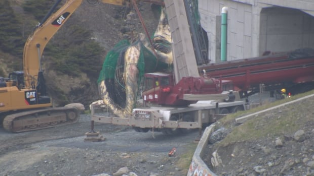 The carcass is lifted onto the back of a large truck by a crane after being retrieved from the water.
