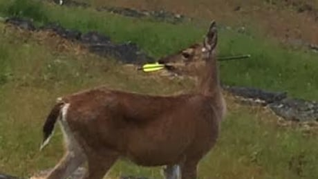 deer shot with crossbow