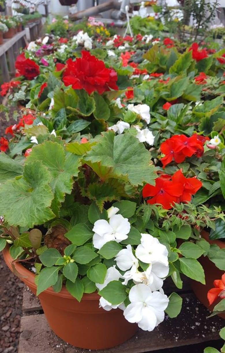 Peis Top 7 Garden Trends For 2017 Cbc News