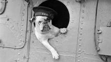 dogmascot