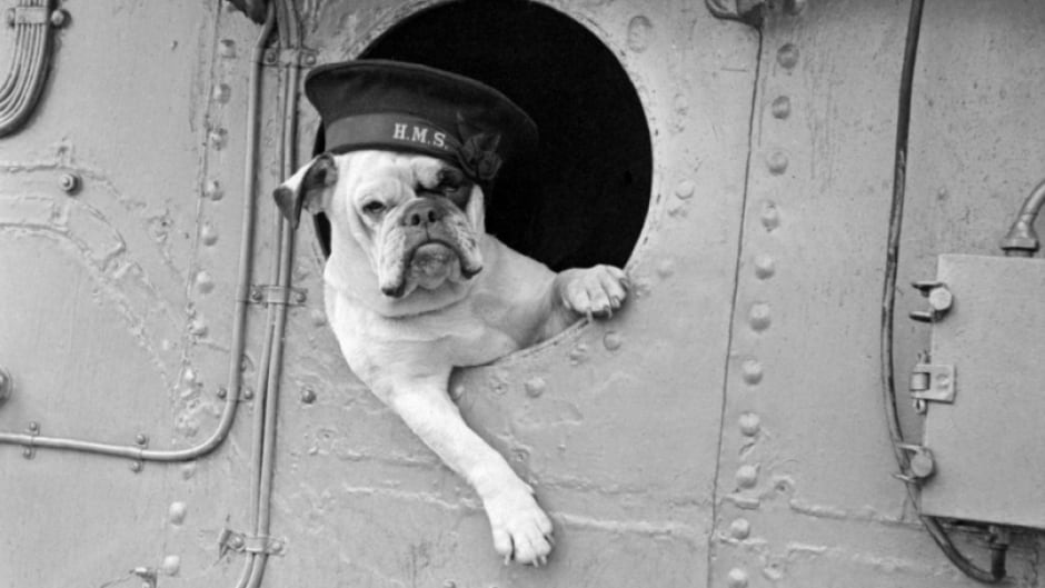 Animals often served as mascots during the Second World War.