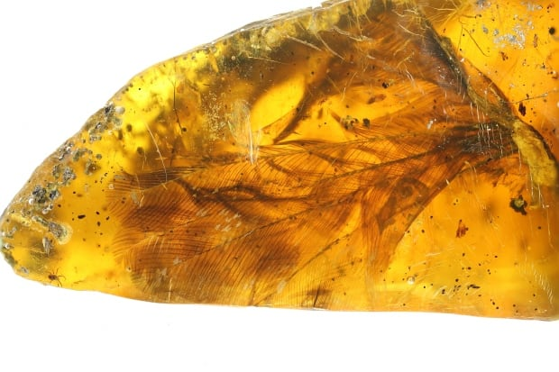 Amber bird specimen