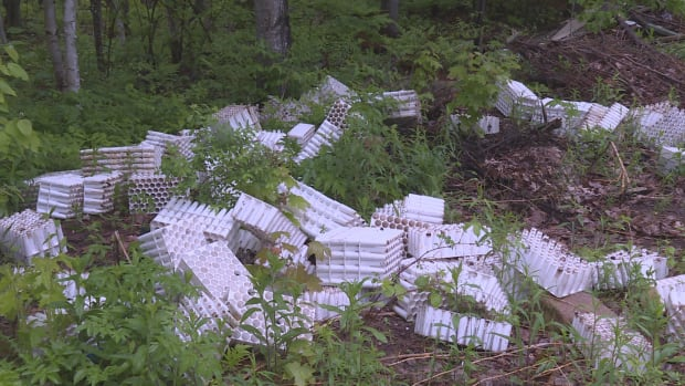 More than 200 plastic seedling trays had been dumped in the forest along Clauidie Road, just outside the Fredericton city limits
