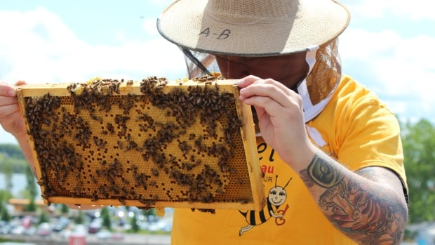 Accueil Bonneau's beekeeping program has been running for the last four years.