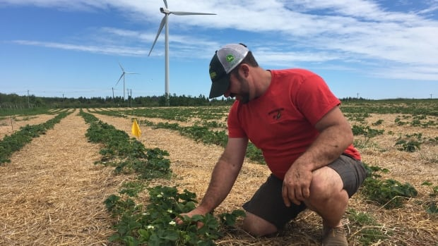 'I'm probably about the youngest grower on the Island that grows any amount of acreage right now,' says Matthew Compton, 32.