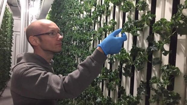 Stephane Lanteigne can grow around 150 lbs of kale in his modular farm, which operates 365 days a year.