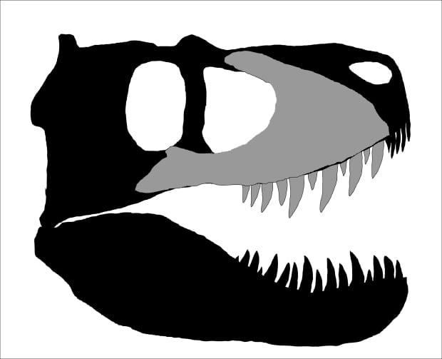 B.C. Dinosaur skull