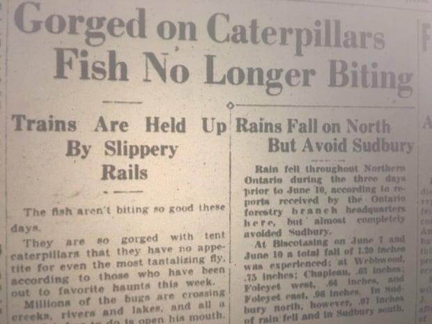 1936 caterpillar coverage